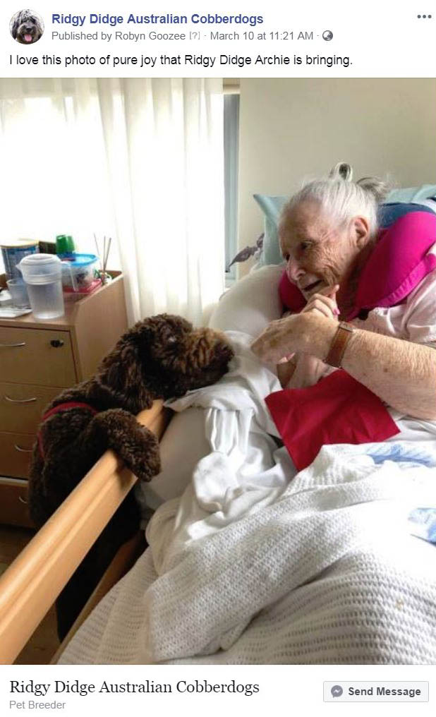 Cobberdog visits hospital patients